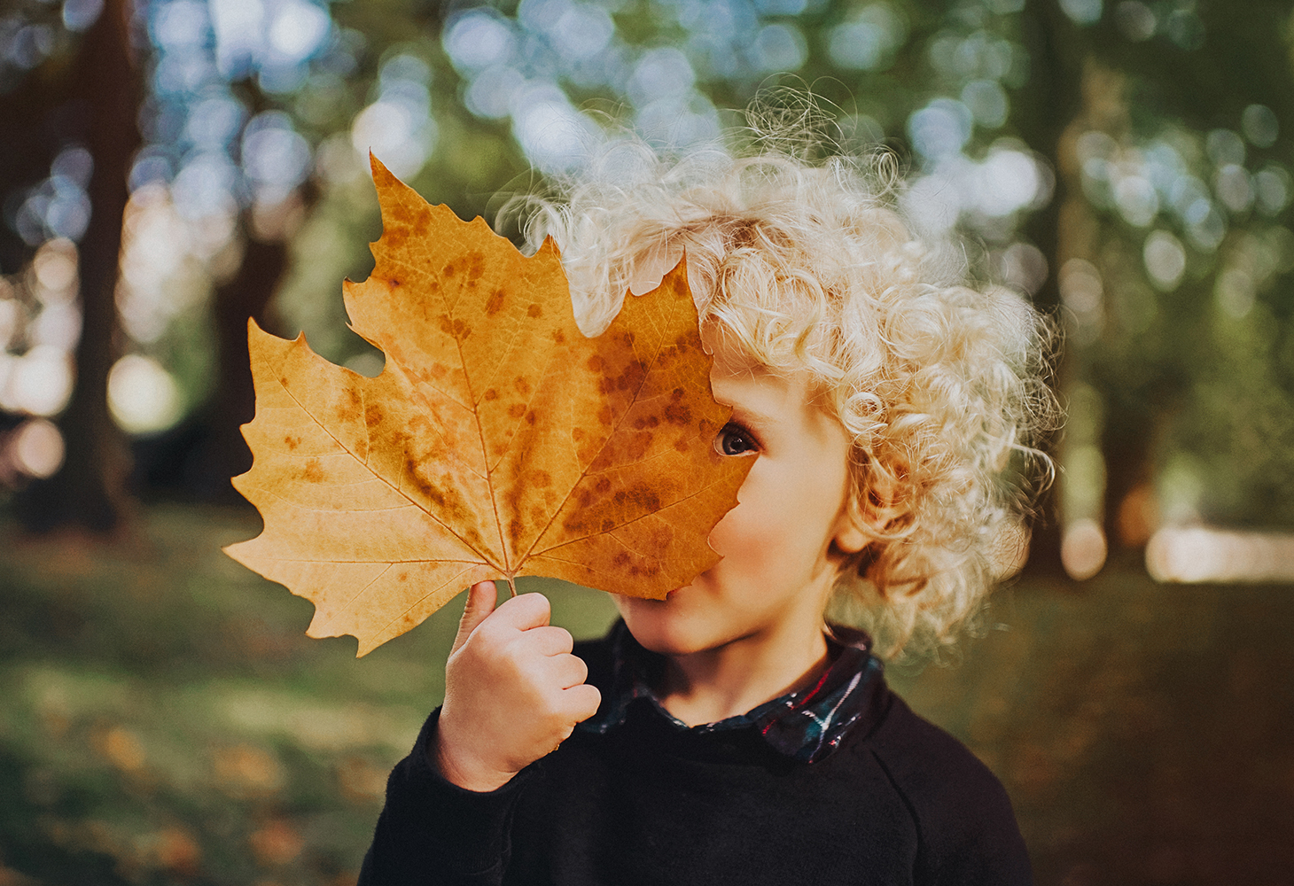 Get fall ready for autumn